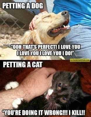 Dog And Cat Memes - differences between dogs and cats meme dog memes and fun pinterest cats memes and wells