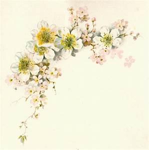 Antique Images: Free Flower Graphic: Vintage Dogwood ...