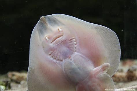 schutzstation wattenmeer tiere ausgestorbene tiere
