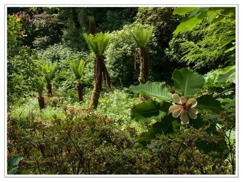 verloren tuinen van heligan e ebooks lente in hyde park foto groot brittannie ecktiv
