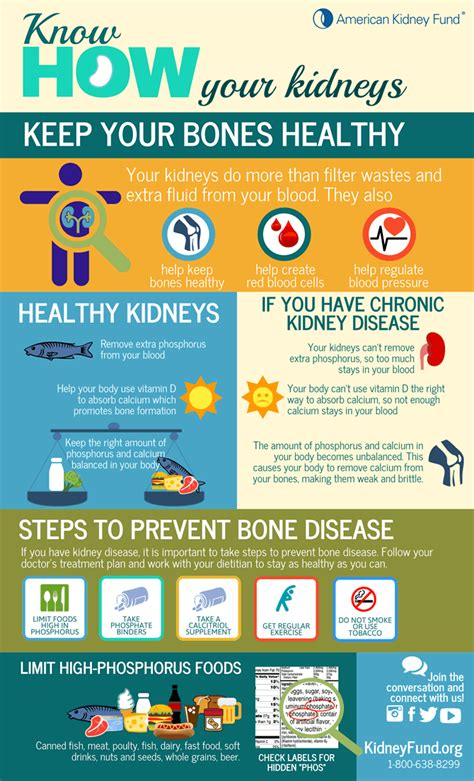 infographic   kidneys   bones healthy