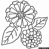 Coloring Flower Zinnias Zinnia Flowers Border Drawing Printable Drawings Colouring Line Rose Thecolor Floral Embroidery Pattern Sheets Designlooter Mandala Patterns sketch template