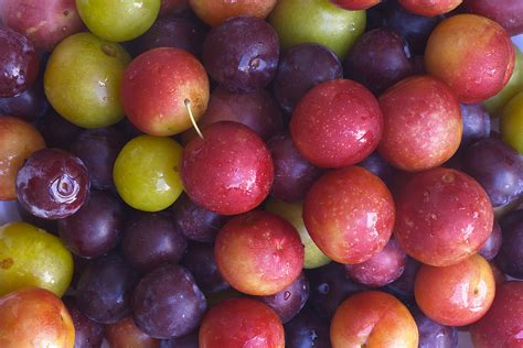 harvest table plums kitchen basics harvest to table