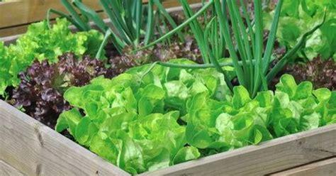 renove cuisine 10 fruits ou légumes à planter dans un bac potager