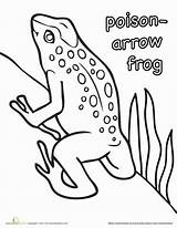 Frog Poison Coloring Arrow Dart Pages Rainforest Frogs Worksheet Education Worksheets Draw Animals Sheets Animal Toad Reptiles Crafts Designlooter Craft sketch template
