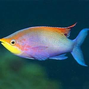 Rare Fish available from our aquarium store -Amazing Amazon