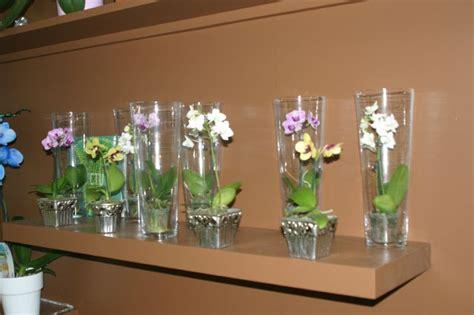 les orchidees miniatures fleurs aquarelle