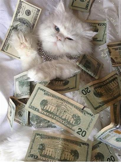 Cat Weed Kitty Glitter Lovely Dope Money
