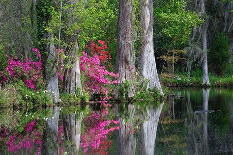 magnolia plantation gardens charleston sc magnolia plantation west charleston county