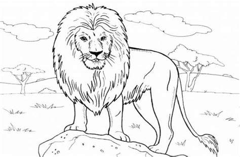 lion standing   rock coloring page color luna