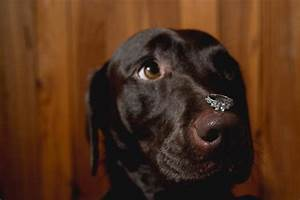 top 10 cutest and most lovable dogs at the wedding With dog wedding ring