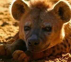 Animal Extreme Close-ups - Animal Facts Encyclopedia  Animal