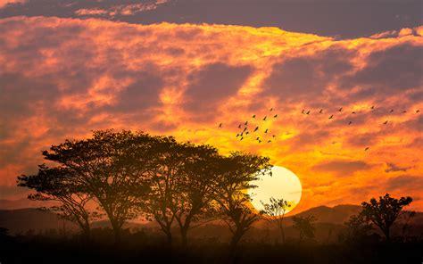beautiful sunset red sky clouds trees birds mountains desktop hd wallpaper  pc tablet  mobile  wallpaperscom
