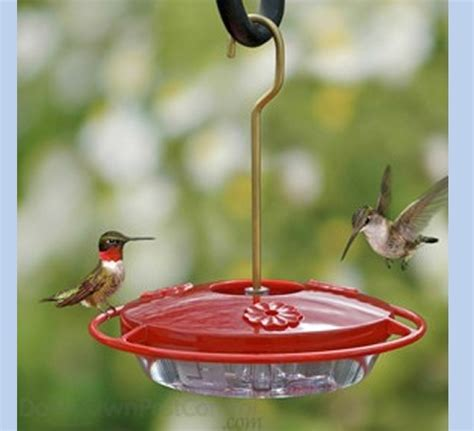 hummingbird feeder small the bird man