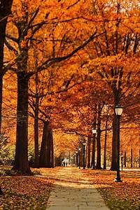 street, pathway, leaf, , u00b7, free, photo, on, pixabay