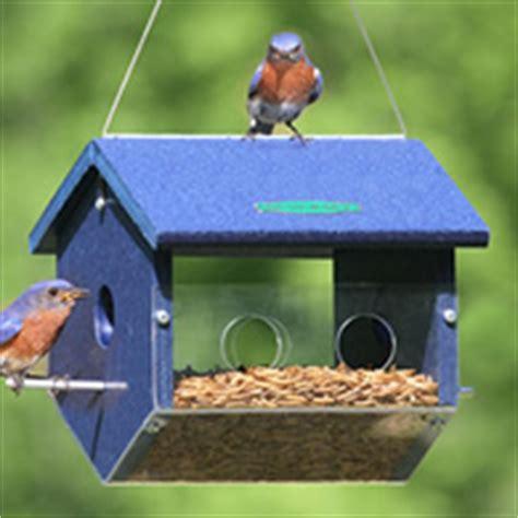 types  wild bird seed seed chart