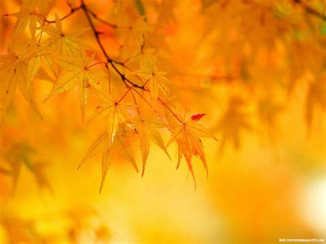 Autumn Leaves Fall Backgrounds Powerpoint by Tree Leaves Powerpoint Background Wall