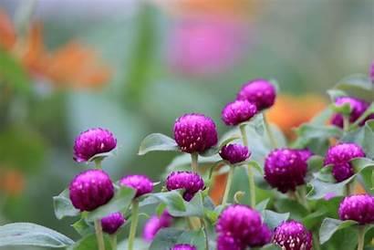Flowers Purple Flower Violet Jooinn Spring Found