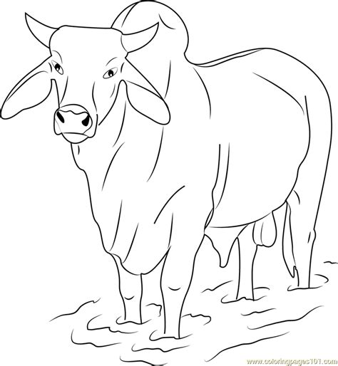 gray zebu bull coloring page  bull coloring pages