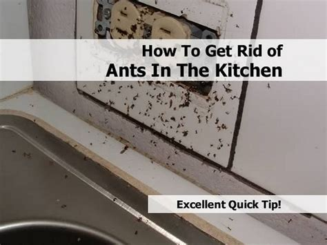 getting rid of ants how to get rid of ants in the kitchen