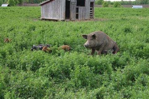 food fight berkshire pork  kurobuta pork center   plate dartagnan blog