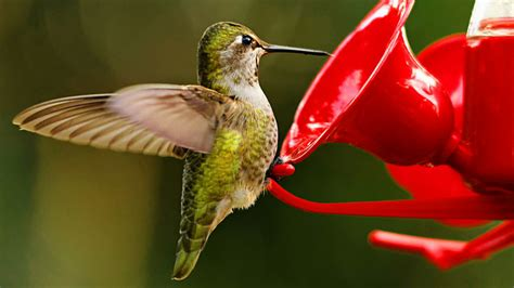 what s the best recipe for hummingbird nectar all about