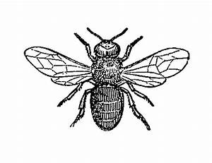 Insects In Black In White - ClipArt Best