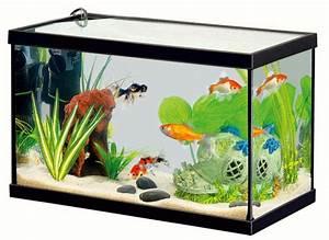 Le Petit Aquarium Design