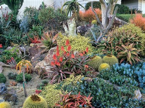 southern california succulents world of succulents photo 2016 01 21 23 00