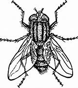 Coloring Insect Clip Fly Graphic sketch template