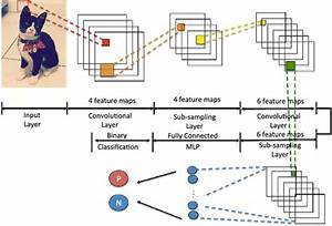 Convolutional neural network | Download Scientific Diagram