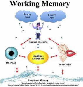 Working Memory Definition, Facts, Symptoms and Strategies ...