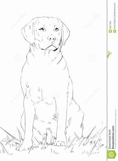 Labrador Dog Drawing Sitting Pencil Young Drawings