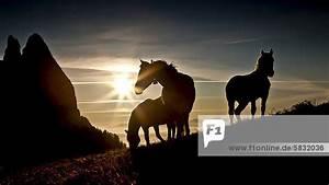 Sonnenuntergang Berechnen : dolomiten europa italien schlern seiser alm s dtirol pferde bei sonnenuntergang ~ Themetempest.com Abrechnung