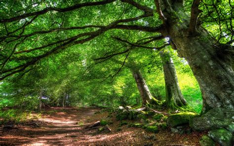 Forest wallpapers, backgrounds, images 3840x2160— best forest desktop wallpaper sort wallpapers by: Green Desktop Wallpaper (77+ images)