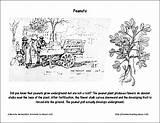 Coloring Milkshake Hernandez Peanuts Beverly Worksheets September Chocolate Holidays Peanut sketch template