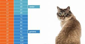 Healthy Dog Chart How Old Is Your Cat In People Years