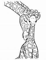 Giraffe Coloring sketch template