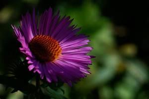 Was Ist Halbschatten : gl hend im halbschatten foto bild pflanzen pilze flechten bl ten kleinpflanzen ~ Orissabook.com Haus und Dekorationen