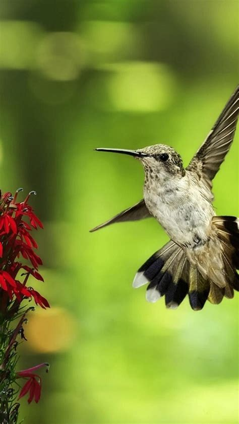 htc  max animal hummingbird android wallpaper