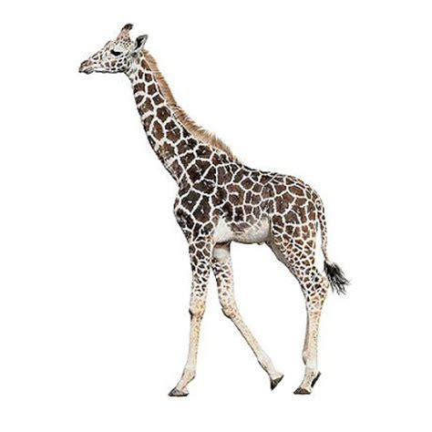 ANIMALS PICTURE: 121 125 Animals Image