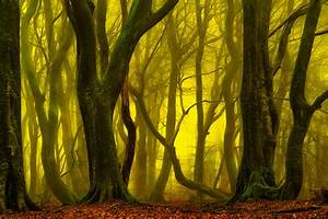 Return To The Magical Forest Lars Van De Goor
