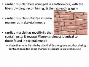 Structure of cardiac muscle excitation contraction ...