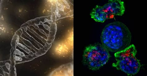 11 Developments and Discoveries in Human Biology and ...