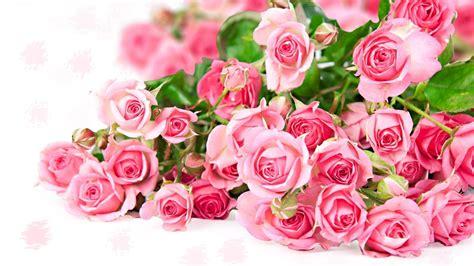 Rose Flower Wallpaper Hd ·①