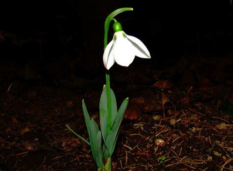 Lang Blühende Winterharte Pflanzen by Winterharte Pflanzen Den Garten Das Ganze Jahr Lang