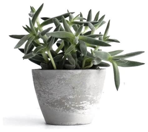 modern indoor planters pompidou concrete planter contemporary indoor pots and