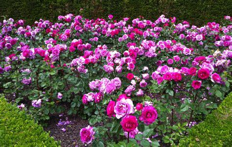 bouquet flowers  grow  winter ace gardener