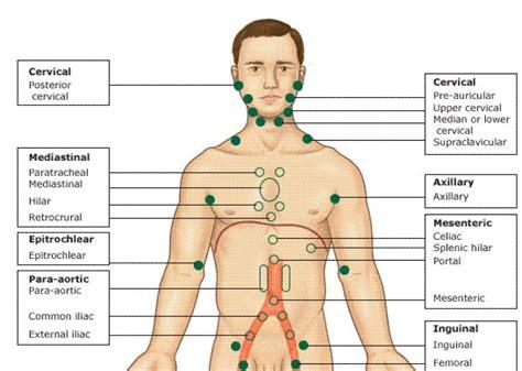 diagram  lymph nodes  upper body periodic diagrams