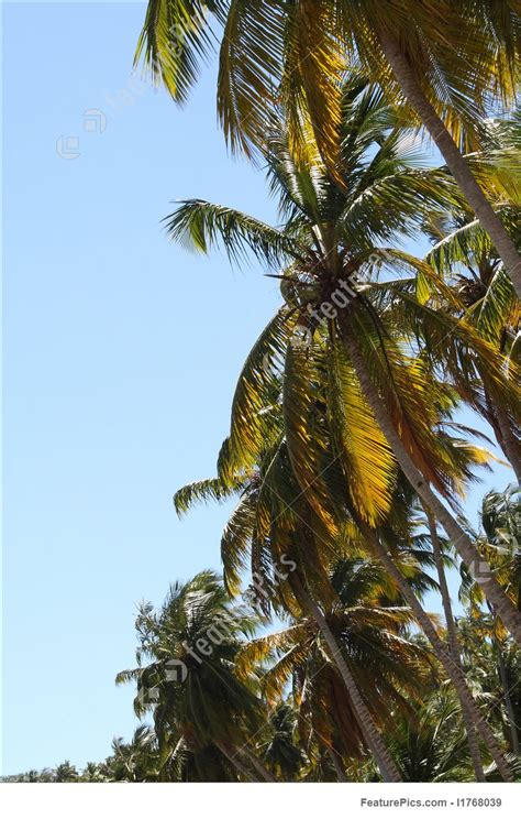 plants palm tree border stock picture